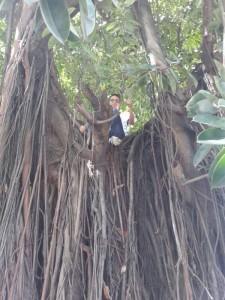 Subindo na árvore
