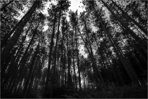bosques-depressão