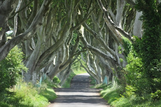 this-ominous-location-is-the-dark-hedges-in-county-antrim-northern-ireland
